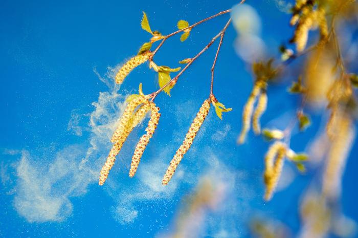 Alergia wiosenna – kiedy wymaga leczenia